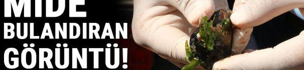 Curabitur lacinia vehicula est vitae blandit. In bibendum, tortor vitae lobortis rhoncus,
